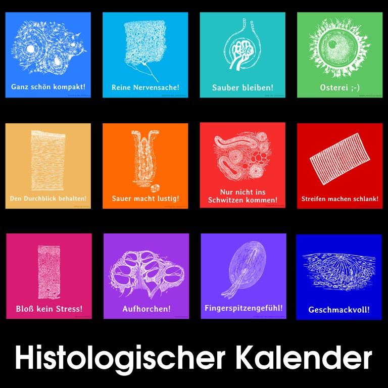 Kalender_Histologie_00-Uebersicht.png