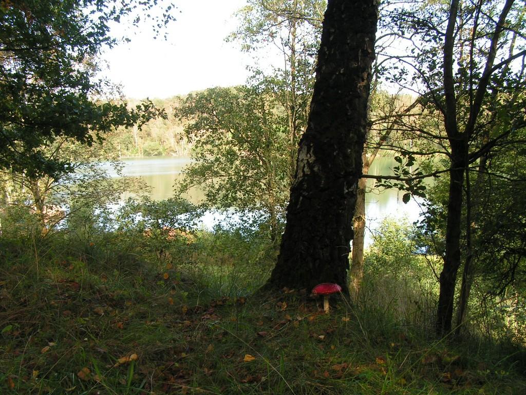 Foto_Natur_Pilz_am_See.jpg