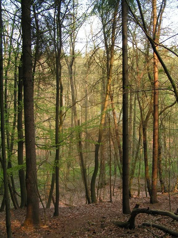Foto_Natur_Wald_im_Fruehling.jpg