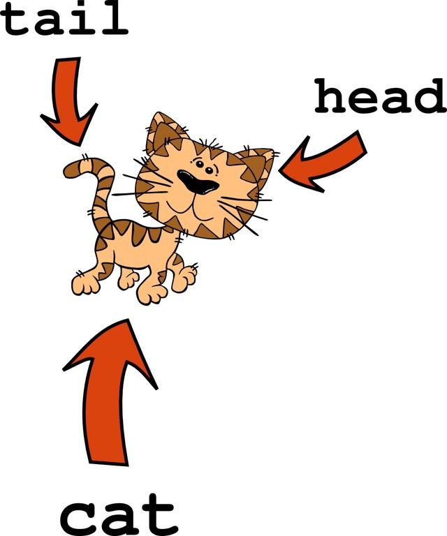 Infografik_Cat_Head_Tail.png